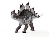 Illustration of a stegosaurus