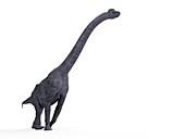 Illustration of a brachiosaurus