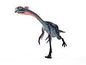 Illustration of a gigantoraptor