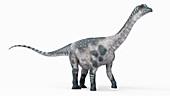 Illustration of a antarctosaurus