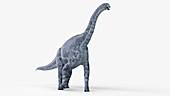 Illustration of a cetiosaurus