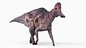 Illustration of a corythosaurus