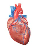 Illustration of a heart with 3 bypasses