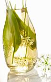 Selbst angesetzter Bärlauchessig mit weißem Balsamico, Bärlauchblättern und Bärlauchblüten in einer Weckflasche