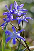 Blütenmakro von Blausternchen