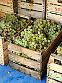 Boxes with grapes during wine harvest