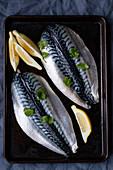 Mackerel filets with lemon