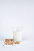 Grains of oat lying near glass with fresh milk and striped straw on white background