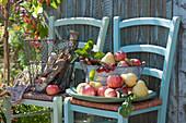 Schale mit frisch gepflückten Äpfel und Birnen auf Stuhl