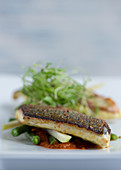 Panfried Seabass with Spring Vegetables and Tomato Sauce
