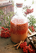 Homemade rowan berry liqueur