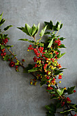 Freshly harvested redcurrants on a sprig