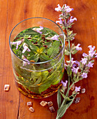 Homemade sage and herb liqueur with flowers, candy and grappa