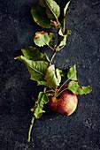 Frisch geernteter Apfel am Zweig