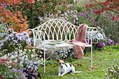 Englische Bank am Beet mit Herbstastern, Hund Zula liegt davor