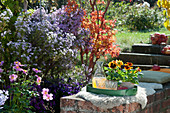 Sitzplatz auf Gartenmauer am Beet mit Herbstastern, Stiefmütterchen im Topf