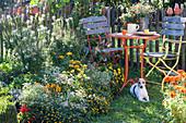 Spinnenpflanze, Husarenknöpfchen, Zinnien, Zauberschnee, Chili und Hund Zula