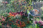 Beet mit Sommerblumen, Chili und Zierapfel in feuerfarben