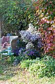 Schattiger Sitzplatz mit Korbsessel und Herbstastern