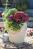 Herbstchrysantheme, Schneebeere, Stiefmütterchen, Knospenheide und Wolfsmilch