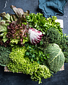 A crate of savoy cabbage, parsley, thyme, lollo, kale, oak-leaf lettuce and radicchio