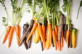 Carrots and purple carrots with green tops