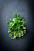Fresh Bunch of Upland Cress on White Background