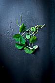 Fresh nasturtium with water drops