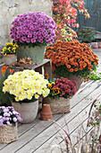 Herbstchrysanthemen in weiß, lila und broncefarben