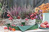 Knospenheide Twin-Girls mit Zieräpfeln als Tischdeko auf Tablett