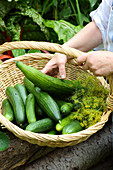 Cucumbers in the basket