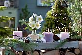 Weihnachtliche Deko mit Christrosen, Kerzen, Zapfen und Kugeln