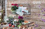 Herbst - Arrangement mit Alpenveilchen und Purpurglöckchen 'Glitter'