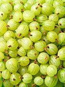 Green gooseberries (edge to edge)