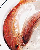 Frische Rotbarben im Wasser