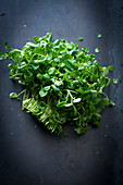 Fresh watercress on a dark background