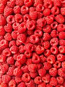 Raspberries (edge to edge)