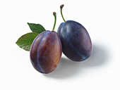 Two purple plums