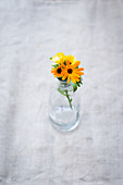 Marigolds in a glass vase