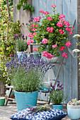 Arrangement mit Lavendel 'Hidcote Blue', Hängegeranie und Schopflavendel