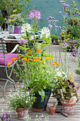 Arrangement mit Ringelblumen, Spinnenpflanze, Eisenkraut, Männertreu