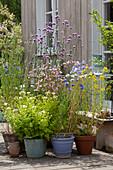 Bienenfreundliches Topf - Arrangement mit Mutterkraut, Kornblumen, Johanniskraut