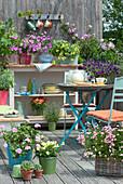 Bunter Balkon mit Sommerblumen und Mini-Rose