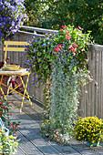 Balkonkasten mit Wasserfallpflanze, Schnappmäulchen und Hängegeranie