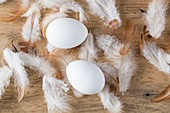 White eggs and hen's feathers