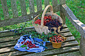 A still life with wild berries on a rustic wooden bench