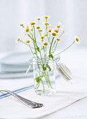 Chamomile branches in a glass jar as a table decoration