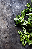 Fresh basil on a gray background