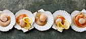Rohe ungekochte Jakobsmuscheln mit Zitronenscheiben (Aufsicht)