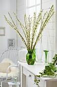 Blühende Zweige der Sauerkirsche